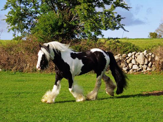 Register a stallion