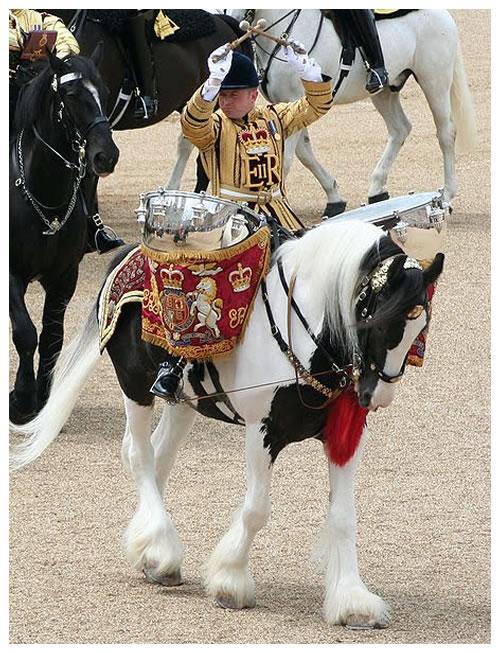 , History of the Coloured Horse, Leisure Horse Ireland