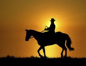 Leisure Horse Ireland